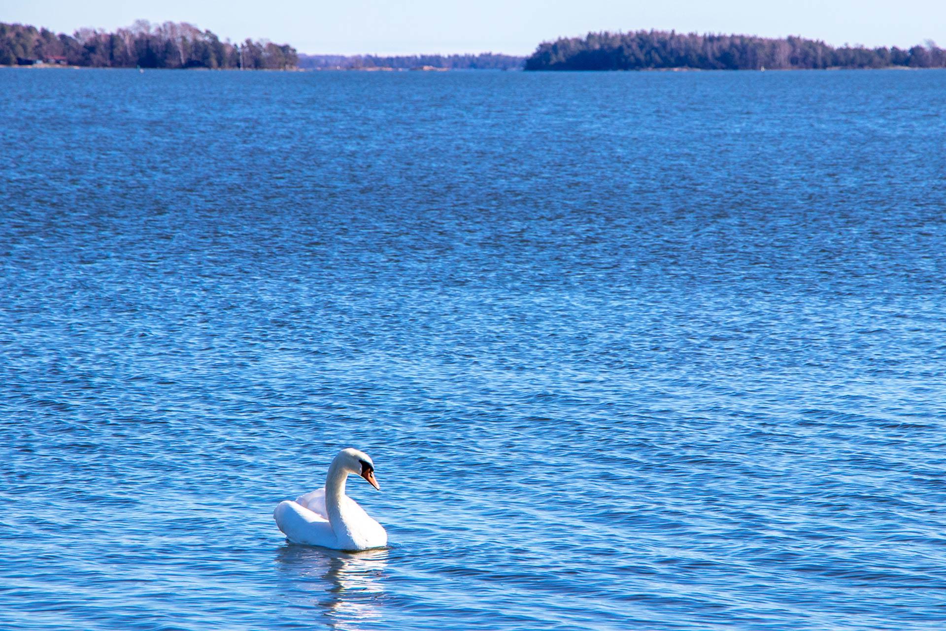 Espoon rantaraitti tarjoaa upeat puitteet ulkoiluun meren välittömässä läheisyydessä.