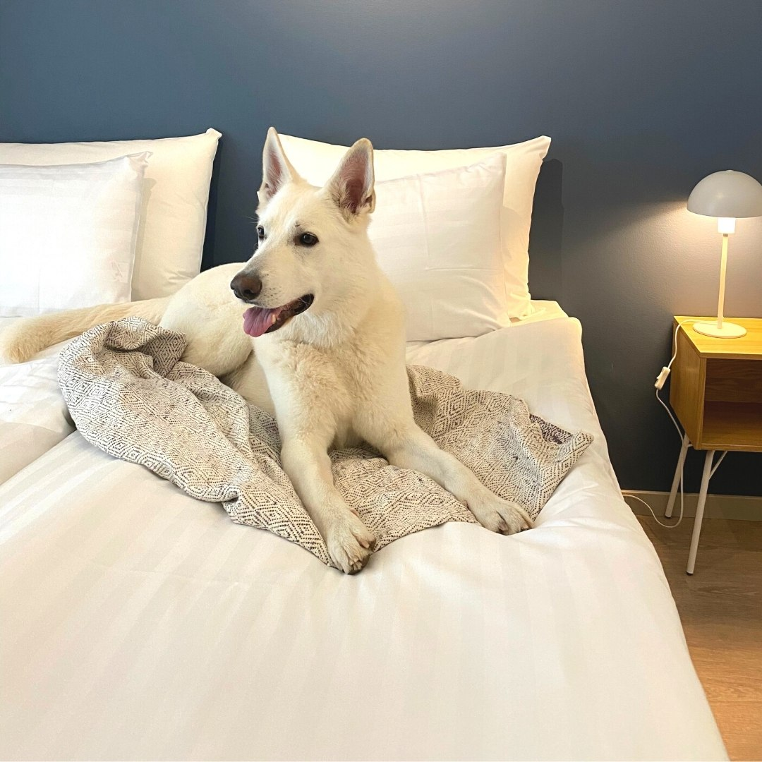 Hotel Matts on lemmikkiystävällinen hotelli Espoossa golfkenttien läheisyydessä.