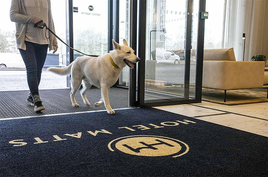 Lemmikki sapumassa majoittumaan Hotel Mattsiin Espoon Matinkylään.