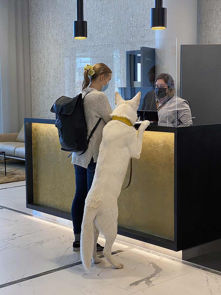 Lemmikki mukana etätöissä Hotel Mattsissa, Espoon Matinkylässä.